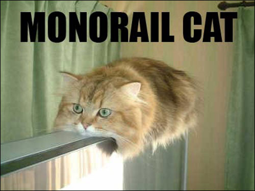 roflcats lol chat lolcats catz photo chats insolite monorailcat monorail cat