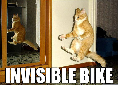 roflcats lol chat lolcats catz photo chats insolite invisible bike