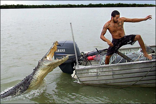 photo attaque crocodile marecage alligator bebe