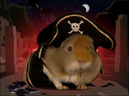 photo guinea pirate pig south park