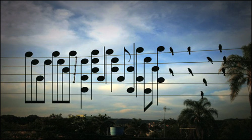 birds on the wire musique oiseaux audiophile