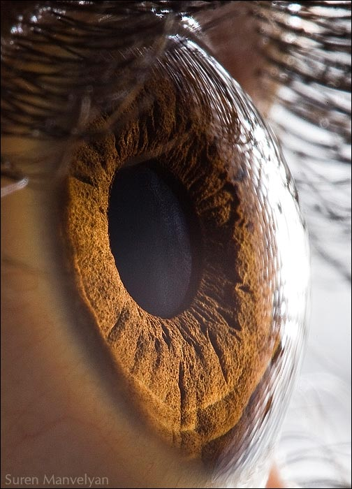 photographie yeux oeil macro photo haute definition picture