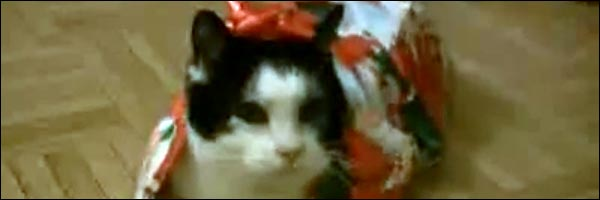 chat cadeau noel emballage sapin jouet video drole
