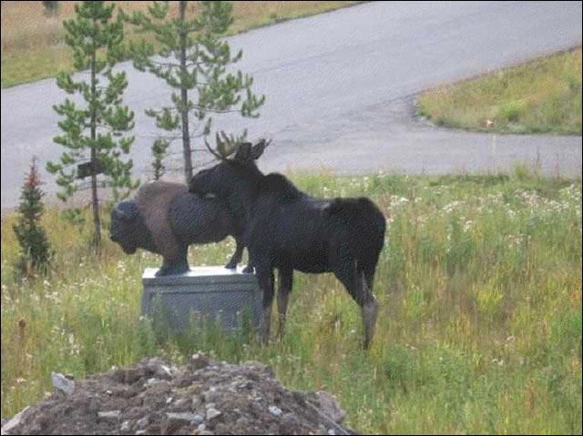 erreur judiciaire viol collectif erreur de jeunesse elan statut bison