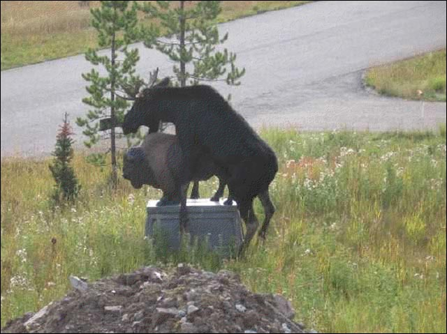 erreur judiciaire viol statutaire erreur monumentale statue elan bison