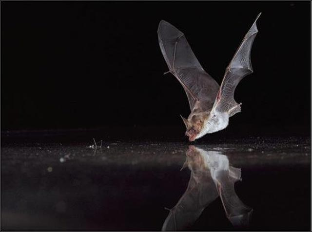 best of 2010 photo science animal technologie ecologie