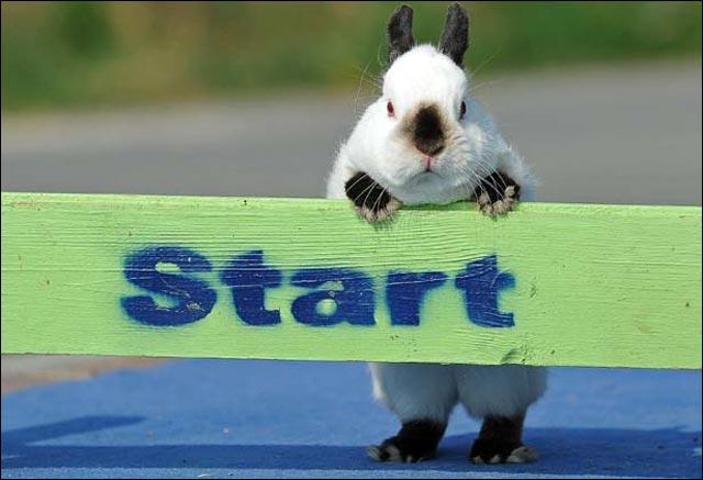 photo joli lapin saut hauteur competition sport leporide animal mignon