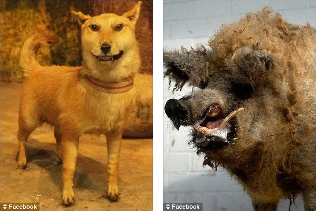 photo insolite animal empaille naturalise taxidermiste fou animaux droles