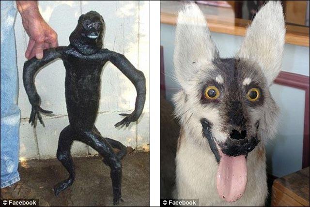 photo insolite animal empaille naturalise taxidermiste fou animaux droles