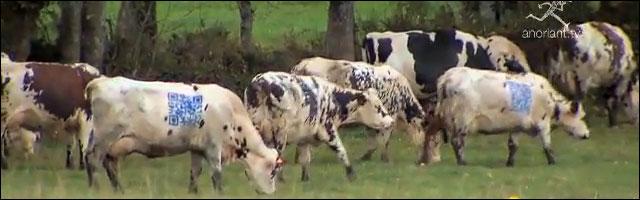 buzz video lol tag vache qr code jeu grattage gratuit concours gagner lait fromage