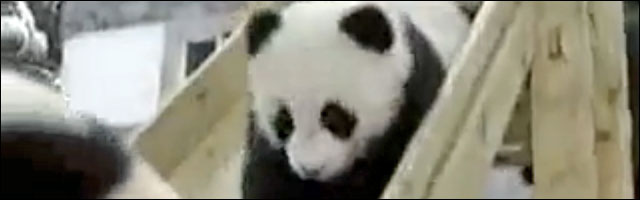photo video panda toboggan failed parc jardin enfant bebe panda zoo France
