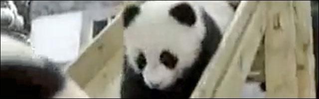 photo video panda toboggan failed parc jardin enfant bebe panda zoo France