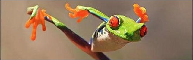 photo insolite drole animaux arts martiaux karate singe ours grenouille kangourou