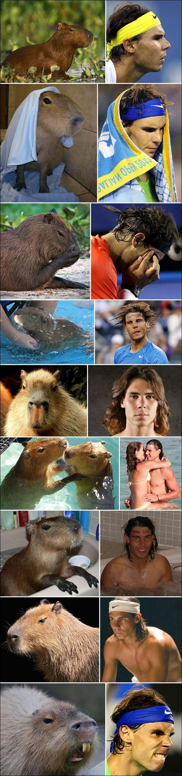 photos droles vrai Rafael Nadal castor joueur tennis 2e mondial ATP tete castor