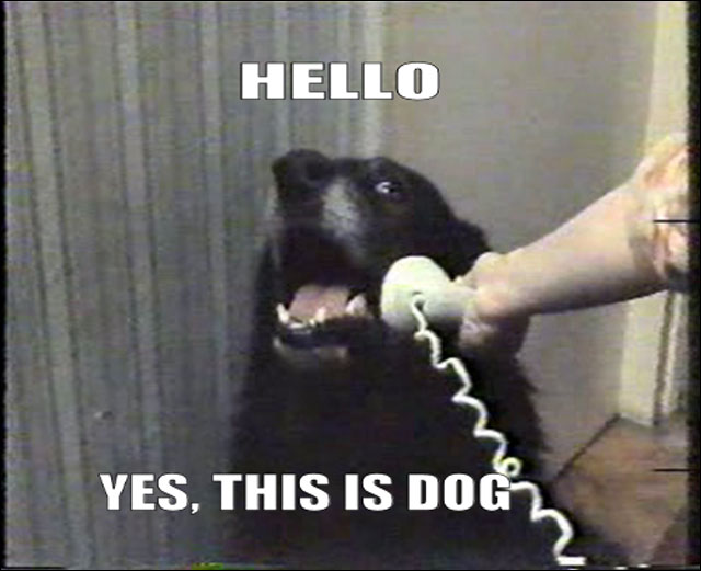 hello yes this is dog meme photo image chien qui telephone drole