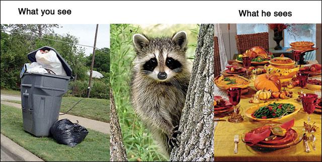 point de vue animal contre realite photo drole animaux chat chien cochon maison