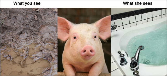 point de vue animal contre realite photo drole animaux chat chien cochon maison