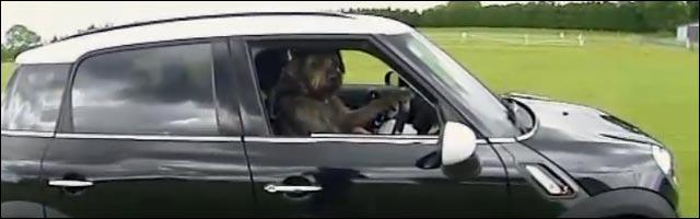 auto ecole pour chiens