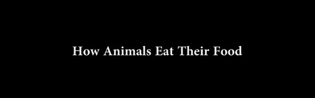 How Animals Eat Their Food Comment mangent les animaux