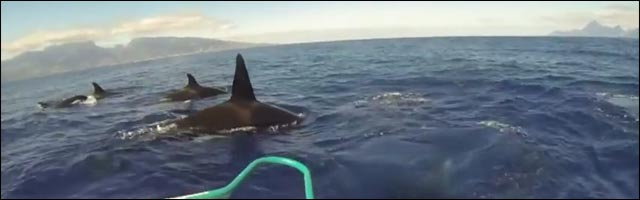 video hd insolite animaux escorte orques mer Tahiti