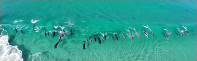 video dauphins bodyboard Australie surf