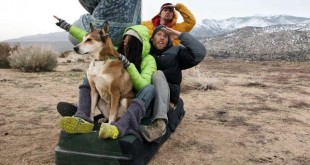 photo video chien voyageur tour du monde