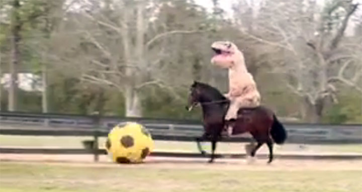 trex cheval football WTF