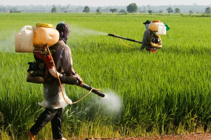 photo pesticides champs