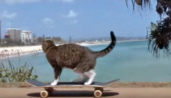 chat skate skateboard sk8